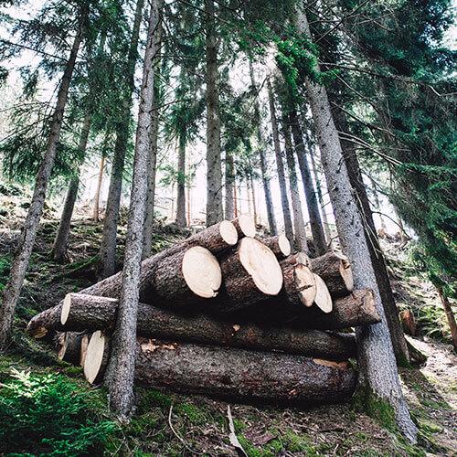 Wälder für immer für alle