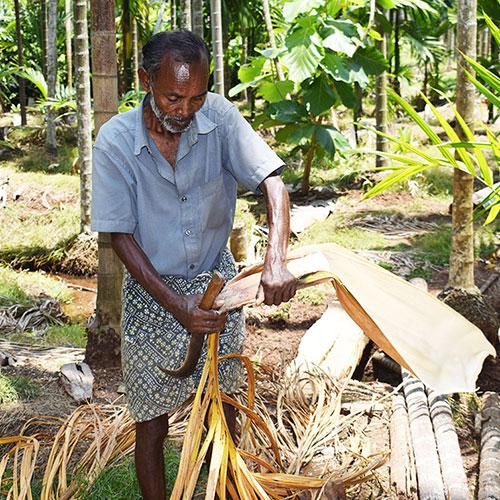 Mitarbeiter bei Palmblatternte