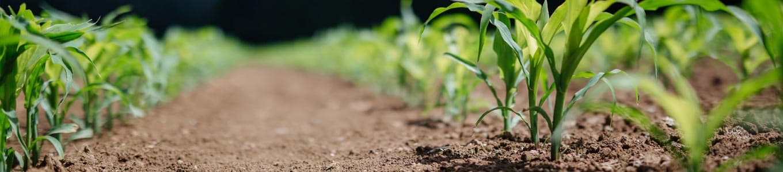 Unterschied biologisch abbaubar, kompostierbar, biobasiert Banner
